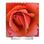 The Rose Shower Curtain