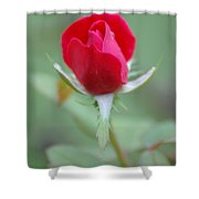 The Rosebud Shower Curtain