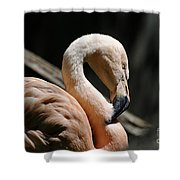 The Sacred Old Flamingoes Shower Curtain