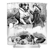 The Saint Bernard Club Dog Show Shower Curtain