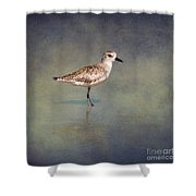 The Sanderling 2 By Darrell Hutto Shower Curtain