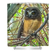The Savvy Saw-whet Shower Curtain