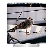 The Seagull Shower Curtain