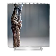 The Seagulls Knee  Shower Curtain