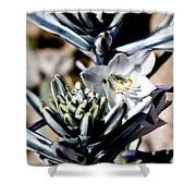 The Shy Desert Lily Shower Curtain