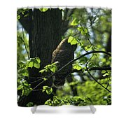 The Shy Owl Shower Curtain