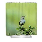 The Singing Birdie  Shower Curtain