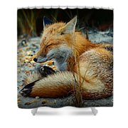 The Sleepy Fox Shower Curtain