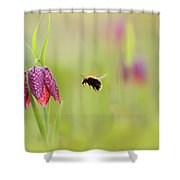The Snake's Head And The Bumblebee - Fritillaria Meleagris Shower Curtain