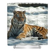 The Snowy Lion Shower Curtain