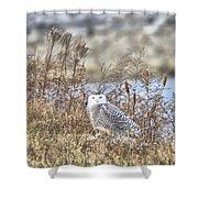 The Snowy Owl Shower Curtain