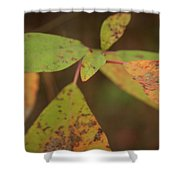 The Soft Intensity Of Fall 6210 H_2 Shower Curtain