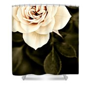The Softest Rose Shower Curtain