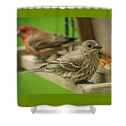 Two Finch's Shower Curtain