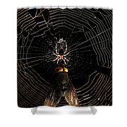The Spider  And The Fly Shower Curtain