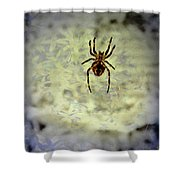 The Spider Waits Shower Curtain