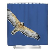 The Spirit Of The Hawk Shower Curtain