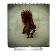 The Squirrel In The Winter Garden Shower Curtain