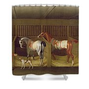 The Stables And Two Famous Running Horses Belonging To His Grace - The Duke Of Bolton Shower Curtain