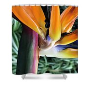 The Stalk Shower Curtain