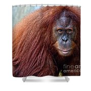 The Staring Contest Shower Curtain
