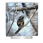 The Starling Shower Curtain