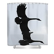 The Stone Birds Shower Curtain