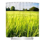 The Summer Crop Shower Curtain by Trevor Wintle