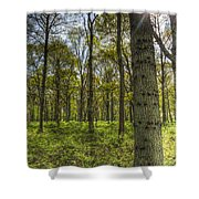 The Sun Touched Forest Shower Curtain