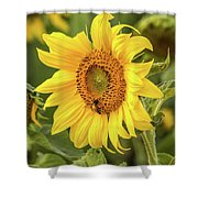The Sunflower Shower Curtain