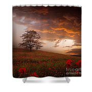 The Sunset Of The Poppies Shower Curtain