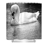 The Swans Solitude Shower Curtain