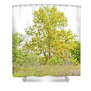 The Sycamore Shower Curtain