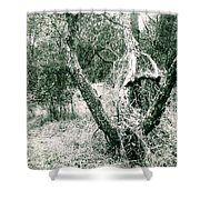 The Thinking Tree Shower Curtain