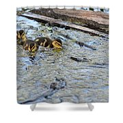 The Three Amigos Ducklings Shower Curtain