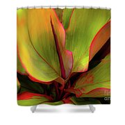 The Ti Leaf Plant In Hawaii Shower Curtain