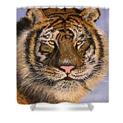 The Tiger, 16x20, Oil, '08 Shower Curtain
