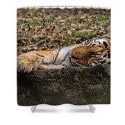 The Tiger's Rock  Shower Curtain