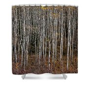 The Tight Aspens Shower Curtain