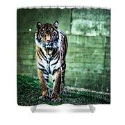 The Tigress Shower Curtain