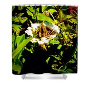 The Tiniest Skipper Butterfly In The Garden Shower Curtain