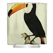 The Toco Toco Toucan  Ramphastos Toco Shower Curtain