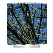 The Top A Glowing Tree Shower Curtain