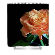 The Touch Of A Rose Shower Curtain by Tracy Hall