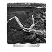 The Tree In The Water. Shower Curtain