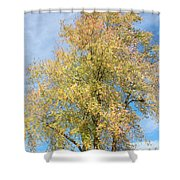 Town Tree  Shower Curtain