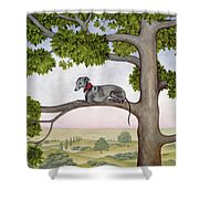 The Tree Whippet Shower Curtain