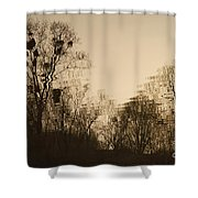 The Trees With Mistletoe. Shower Curtain