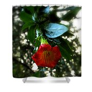 The Trumpet Sounded Shower Curtain