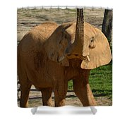 The Trumpeter Sounds Shower Curtain